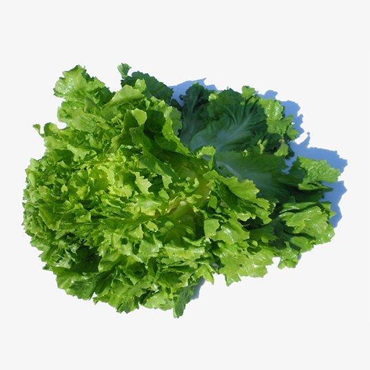 Salade scarole (petite)
